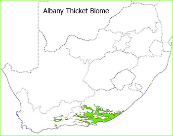 Albany Thicket Biome 2006