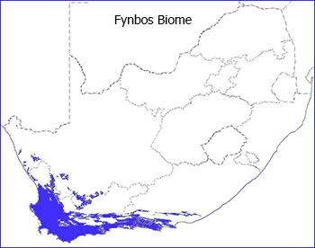 Fynbos biome plantz africa gumiabroncs Choice Image