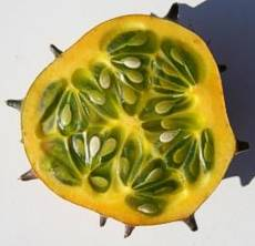 Cucumis metuliferus fruit cross section