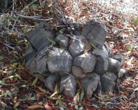 SAGEAWAY Semi Dioscorea Elephantipes Pianta