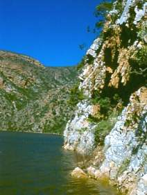 Cliffs beside Kouga Dam- habitat of G. glomerata