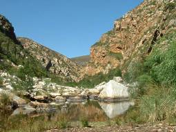 The Kouga River, sheer south-facing cliffs, habitat of G. glauca.