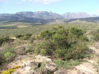Habitat near Clanwilliam