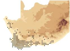 Map of distribution of Lobostemon in SA