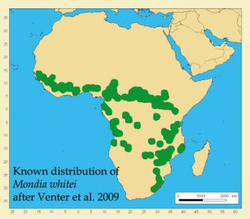 Mondia whitei distribution map