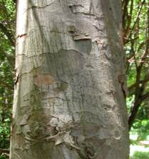 Stem and bark