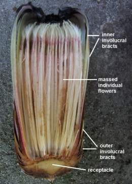 Parts of the flowerhead