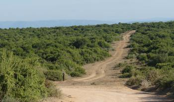 Spekboom in Addo Elephant Park