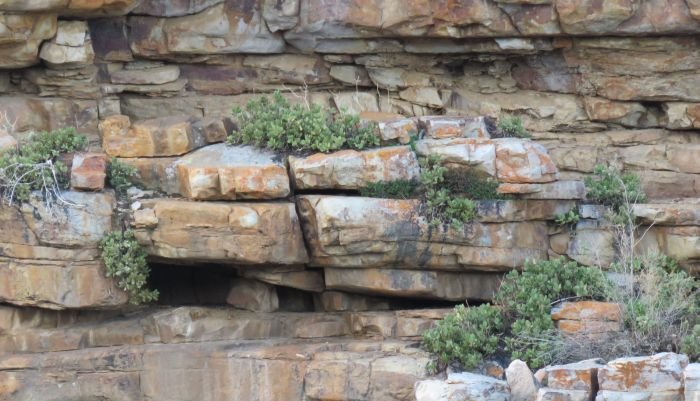 The rocky cliff habitat of Cotyledon tanquana at Die Mond.