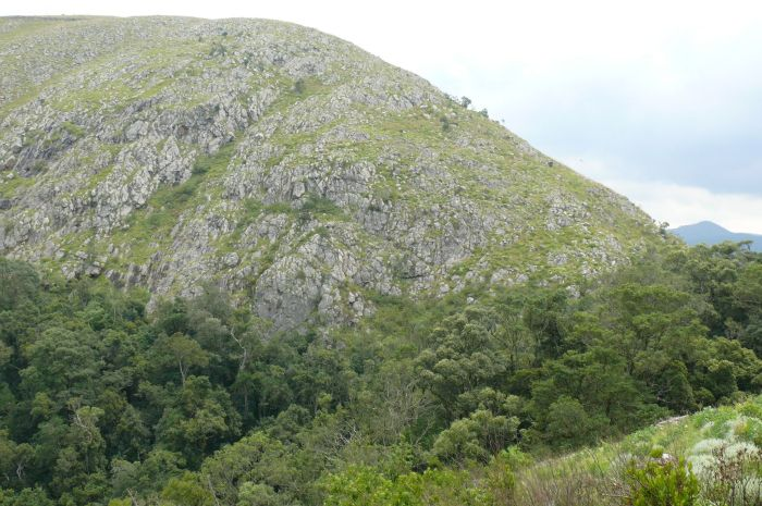 The cliff habitat of Aloe condyae, with Afromontane forest below, south of Barberton, Mpumalanga.
