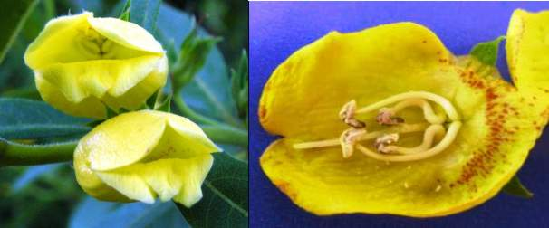 Image of flowers and inside  of flower