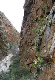 A narrow side gorge of the Baviaanskloof, habitat of Bulbine cremnophila