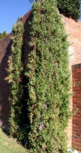 Image shows plant daggling down over wall.