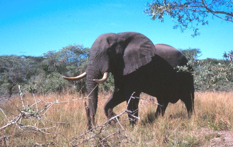 Savanna Biome | Plantz Africa