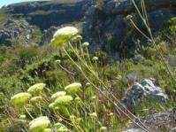 Flowering in habitat