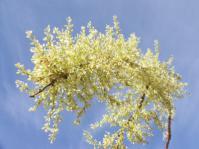 Flower stalk