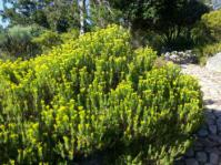 Growing in Kirstenboschj