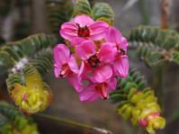 Flowers with ruptured pollen sacs