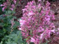 Panicle of flowers