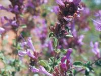 Flower spike