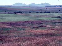 Rooigras grasslands