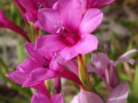 Pink form