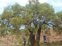 Tree growing in habitat