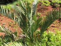 Plant growing in garden