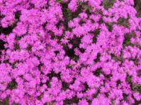 Dazzling display of flowers
