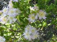 Stoeberia giftbergensis