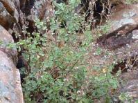 Growing in habitat