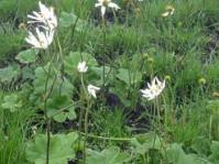 Plant in flower