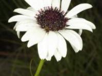 Flower: Photo: von Fintel