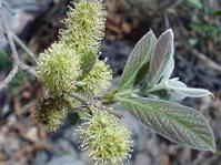 Flower spikes