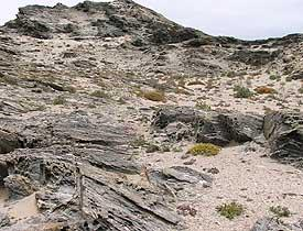 coastal rocky parts with ample sandy soil on granite bedrock.