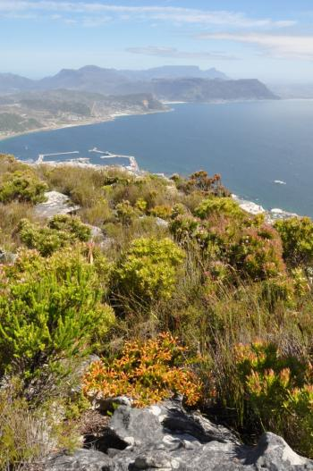 Growing in habitat - Swartkop