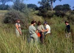 Collecting Monochoria africana in Kruger Park.