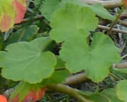 Leaves and stems