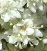 Close up of flowers