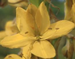 Close-up of individual flower