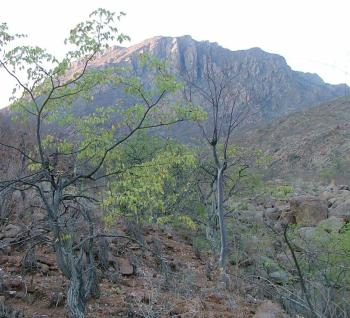 The twin peak where Pelargonium vanderwaltii grows, locally known by the Himba as Okahukumune.