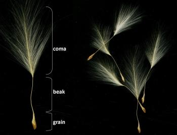 The seed with its different parts.