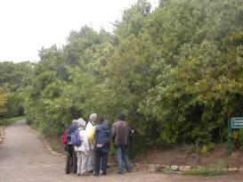 Remains of Van Riebeeck's hedge at Kirstenbosch