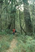 Understorey of afromontane forest near Hogsback, Eastern Cape.
